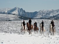 Gredos gallops in the snow