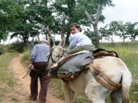 Donkey excursion