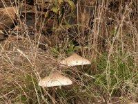 蘑菇飘香路径