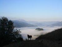 nuestros caballos en sus prados