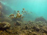 Peces en el fondo del mar