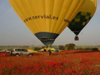 launching from a poppy field