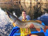 D'énormes espèces de poissons