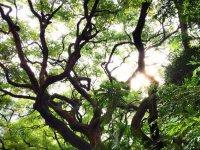 穿过树林太阳走