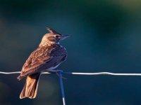 nous contemplons les oiseaux