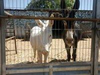 burros en la verja
