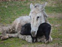 donkey and piggy