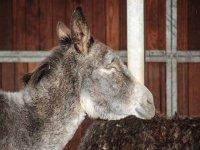burro primer plano