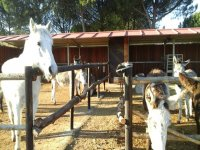 cuadras de animales con tejado