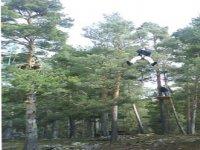 树木间飞行