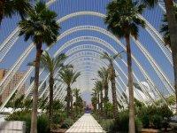 Paseo con palmeras en Valencia