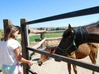 与马匹相互作用
