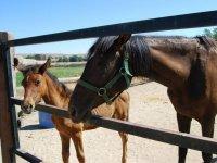 小马驹和母亲