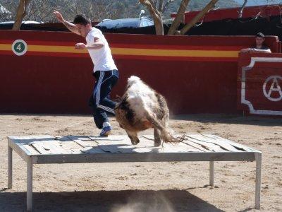 Practicar capeas en Castellón