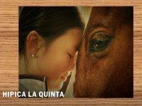 Hípica La Quinta