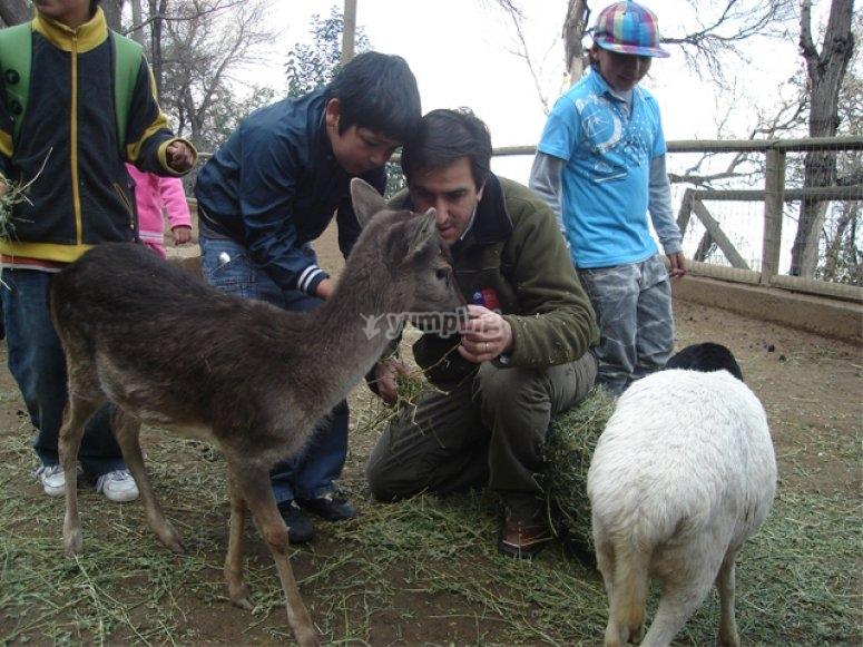 Visita un zoológico con tus hijos