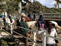 bambini che imparano a cavalcare un cavallo