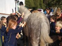 bambini che spazzolano un cavallo
