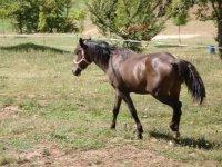Amplio abanico de actividades con caballos