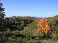 campolebrel
