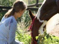 了解你的马