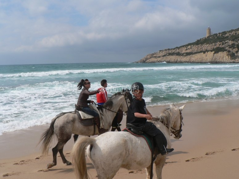Horses advancing through the beach