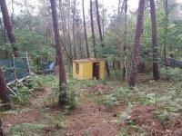 En mitad del bosque