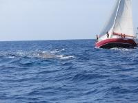Avistamiento desde el barco de vela