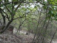 Senderos de una vegetacion increible