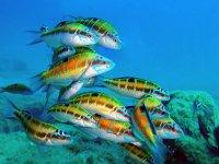 五彩斑fish的鱼在背景中