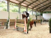 Competicion de salto