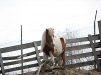 Nuestro pony