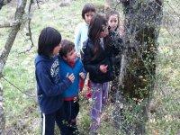 aprendiendo la orientacion por medio de los arboles