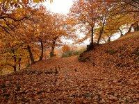 Genal Valley上的叶子