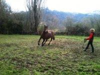 Los caballos pastando