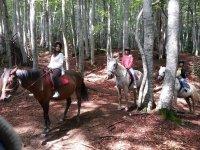 树木中的马匹
