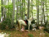 马背上的一匹马