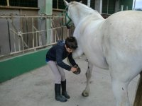 Cura i cavalli