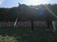 Uno dei nostri cavalli al sole