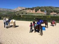 Imparare a gestire i cavalli