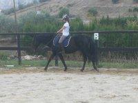 Imparare a domare il cavallo