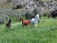 I nostri cavalli si divertono