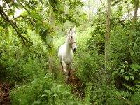 caballos naturales