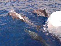 Delfini visti dalla barca