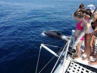 Impressionante cetaceo davanti alla barca