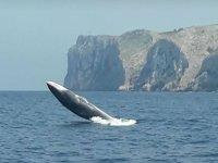 Impresionante cetaceo frente al barco