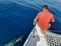 Navegar entre cetáceos por la playa de Málaga