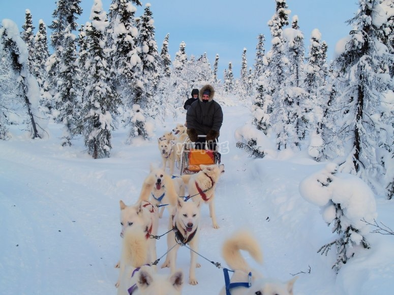 Excursión en trineo tirado por perros