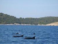 海洋中的鲸目动物