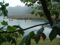 Kayak entre las ramas